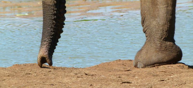 2011_Suedafrika_Diashow-543