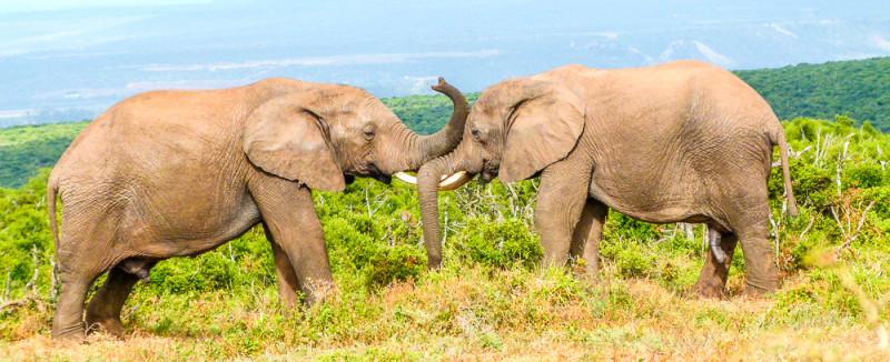 2011_Suedafrika_Diashow-576