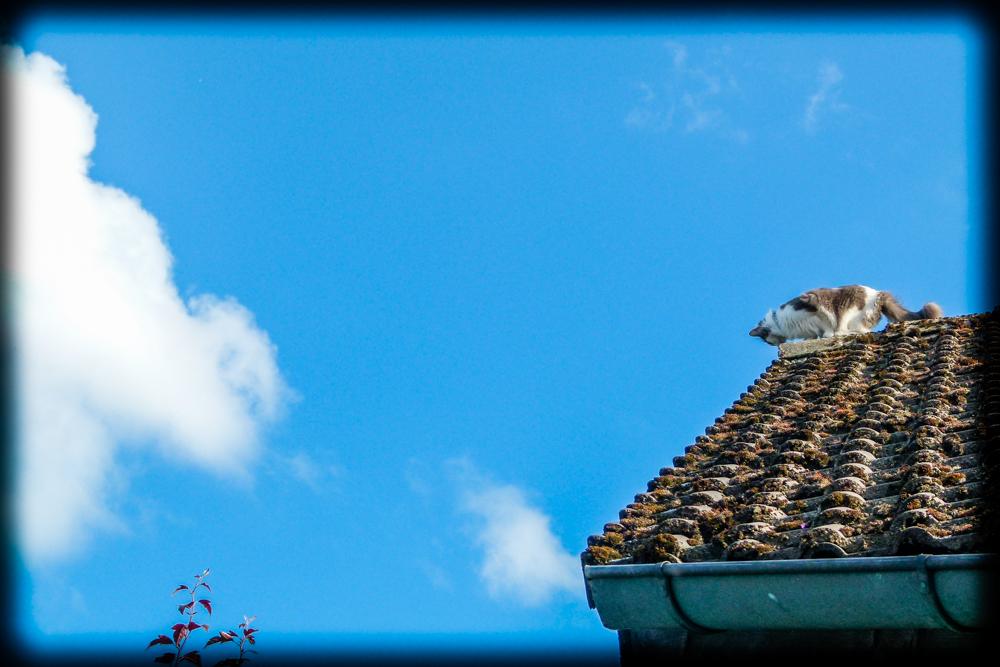 Lucy auf dem Dach