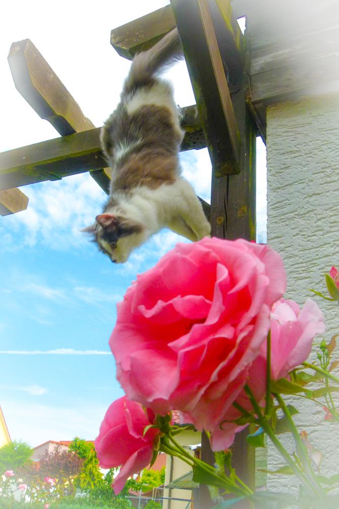 Lucy springt
