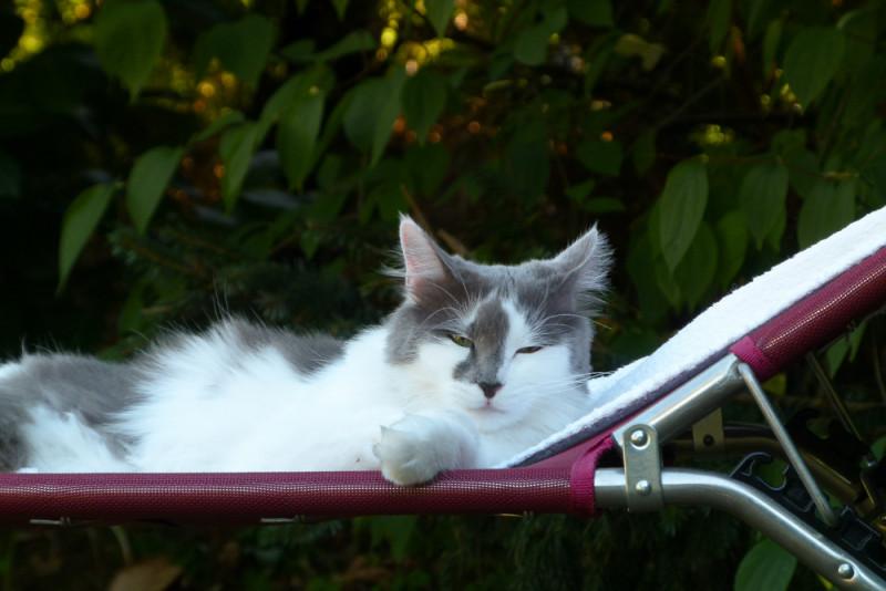 Lucy auf dem Liegestuhl
