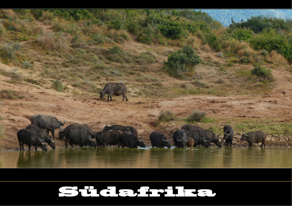 Südafrika_2012